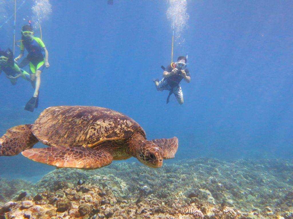 Shoreline Snuba Maui, HI