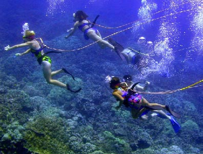 Under Water Shot of Group Scuba Diving