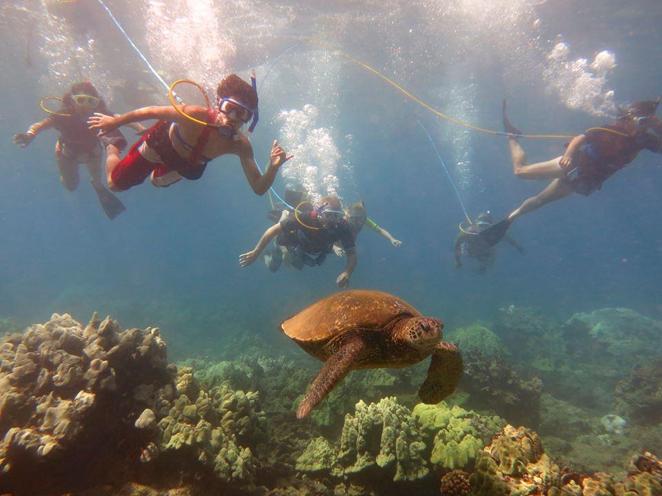 A Picture of a Group of People SNUBA with Sea Turtle.