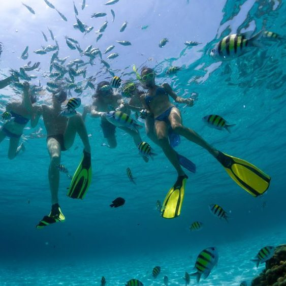 A Picture of a Group of People Snorkeling with Fish.